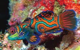 peces-de-colores1
