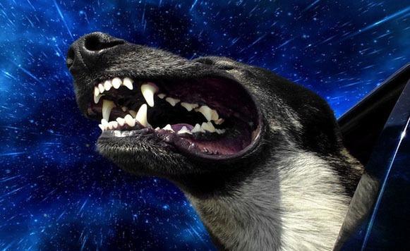 perros warp 1