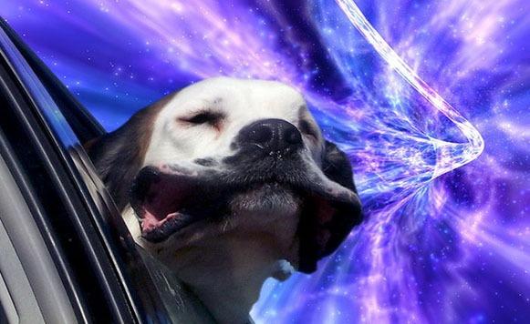 perros warp 3