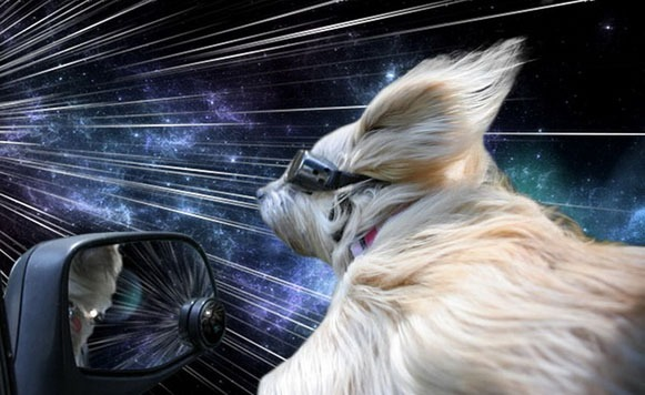perros warp 5