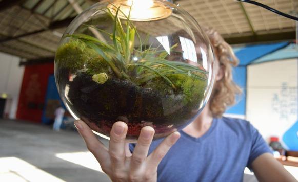 Spruitje-Mini ecosistemas dentro de lámparas (Por Iohanna Küppers)