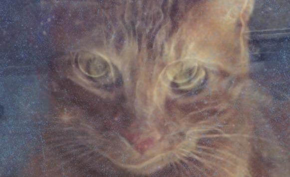 Doctor Simio-Invasion de gatos
